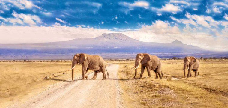 Prachtige rondreis Zuid-Afrika 333Travel | 16 dagen mei 2018 €1538,- per persoon