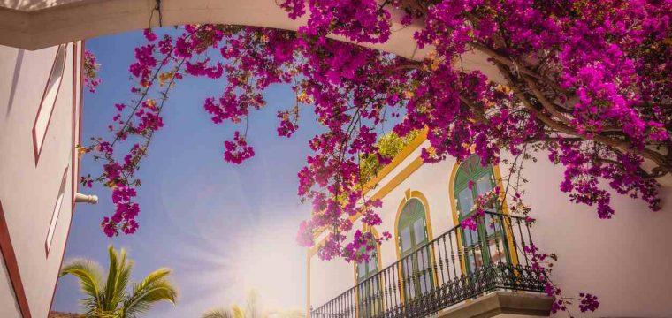 Zomer @ Gran Canaria | 8 dagen augustus 2018 €417,- per persoon